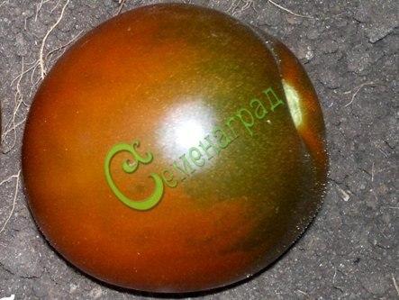 Семена томатов Гиг борао - высокорослый, до 120 г, шоколадный, сливовидный, урожайный. Семенаград - семена почтой