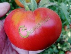 Семена томатов Гранат - 1 уп.-20 семян - высокорослый, до 250 г, плотный, один из любимых. Семенаград - семена почтой