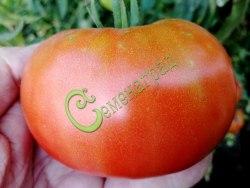 Семена томатов Грейпфрут - 1 уп.-20 семян - высокорослый, желтый с розоватым отливом, до 400 г. Семенаград - семена почтой