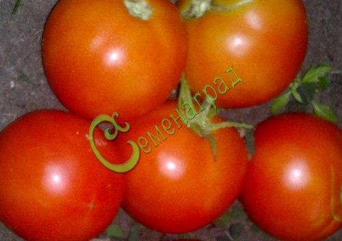 Семена томатов Гризанда - 20 семян - высокорослый, до 120 г, с длинными кистями, многоплодный