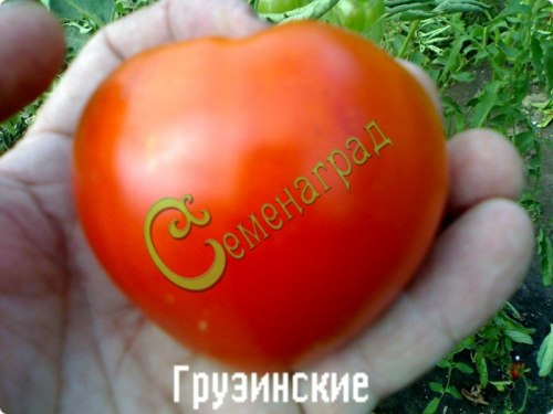 Семена томатов Грузинские - 20 семян - среднерослый, до 300 г, сердцевидный, ранний,