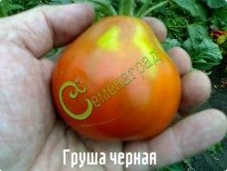 Семена томатов Груша черная - 1 уп.-20 семян - высокорослый, до 120 г, высокоурожайный. Семенаград - семена почтой