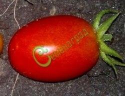 Семена томатов Дамские пальчики - 1 уп.-20 семян - среднерослый, ранний, до 60 г, усыпной, долгое нерерывное плодоношение. Семенаград - семена почтой