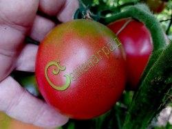 Семена томатов Де борао - 1 уп.-20 семян - высокорослый, до 100 г, урожайный, популярный. Семенаград - семена почтой