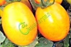 Семена томатов Де борао золотой - 1 уп.-20 семян - высокорослый, до 100 г, урожайный, популярный. Семенаград - семена почтой