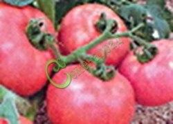 Семена томатов Долгохранящиеся - 1 уп.-20 семян - высокорослый, плотный, до 200 г, розовый, устойчивый, урожайный. Семенаград - семена почтой