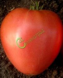 Семена томатов Донские - 1 уп.-20 семян - высокорослые, сердцевидные, до 500 г, розовые, очень урожайные. Семенаград - семена почтой