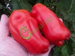 Семена томатов Еллоу Стоффер красный - 1 уп.-20 семян - высокорослый, перцевидный, до 250 г, для фарширования, необыкновенный. Семенаград - семена почтой