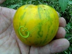 Семена томатов Зебра зелёная - 1 уп.-20 семян - высокорослый, 100 г, жёлтый, в зелёную полоску. Семенаград - семена почтой