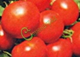 Семена томатов Изящные, 1 уп.-20 семян - высокорослый, урожайный, до 150 г, популярный, очень холодостойкий. Семенаград - семена почтой