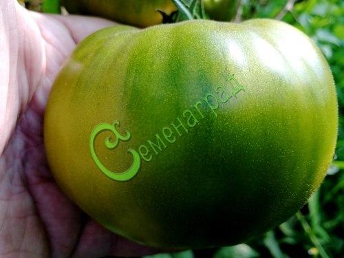 Семена томатов Изумрудный- 20 семян - высокорослый, до 300 г, салатный, сладкий