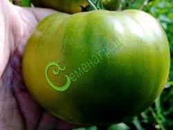Семена томатов Изумрудный - 1 уп.-20 семян - высокорослый, до 300 г, салатный, сладкий, очень урожайный. Семенаград - семена почтой