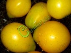 Семена томатов Инжир желтый - 1 уп.-20 семян - высокорослый, до 100 г, очень урожайный. Семенаград - семена почтой