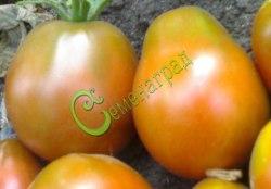 Семена томатов Инжир черный - 1 уп.-20 семян - высокорослый, до 120 г, очень урожайный. Семенаград - семена почтой