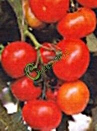 Семена томатов Ирок плюс - 20 семян - высокорослый, до 120 г, урожайный, холодостойкий
