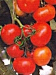 Семена томатов Ирок плюс - 1 уп.-20 семян - высокорослый, до 120 г, урожайный, высокохолодостойкий, всегда с урожаем. Семенаград - семена почтой