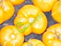 Семена почтой Исмаильский жёлтый,20 семян, высокорослый, ребристый, плоско-округлый, лимонно-жёлтый, бескислотный, 300 г