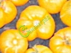 Семена почтой Исмаильский жёлтый - 1 уп.-20 семян - высокорослый, ребристый, плоско-округлый, лимонно-жёлтый, бескислотный, 300 г. Семенаград - семена почтой