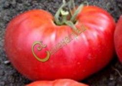 Семена томатов Кавказский великан - 1 уп.-20 семян - высокорослый, малиновый, до 1 кг. Семенаград - семена почтой