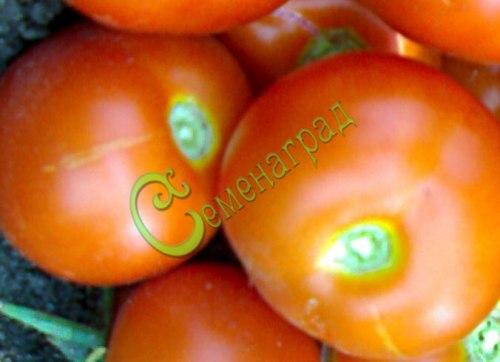 Семена томатов Кавказская лиана - 1 уп.-20 семян - высокорослый, до 100 г, урожайный без предела. Семенаград - семена почтой