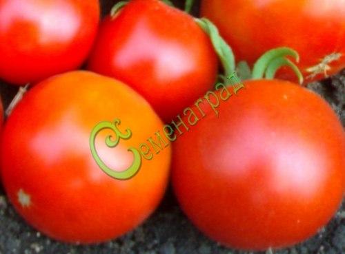 Семена томатов Карлсон плюс - 1 уп.-20 семян - до 150 г, урожайный, выделяется большой энергией роста до 3-4 м и урожайностью. Семенаград - семена почтой