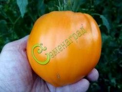 Cемена томатов Клубника оранжевая, 1 уп.-20 семян, выведен в США - высокорослый, сердцевидный, медово-оранжевый, сладкий, до 400 г. Семенаград - семена почтой