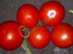 """Семена томатов Князь серебряный, 20 семян, высокорослый, до 400 г, плотный, лёжкий, сначала """"серебряный"""", затем ярко-красный"""
