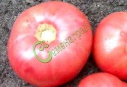 Семена томатов Король ранних - 1 уп.-20 семян - высокорослый, до 250 г, розовый, урожайный, ранний. Семенаград - семена почтой