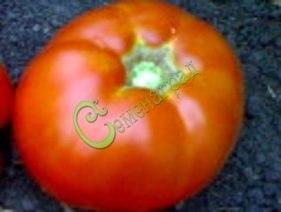 Семена томатов Король Сибири красный - высокорослый, округлый, до 300 г, проверенный годами сорт. Семенаград - семена почтой