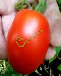 Семена томатов Красная ягода - 1 уп.-20 семян - высокорослый, сливовидный, удлинённый, необыкновенно урожайный, до 100 г, в солку. Семенаград - семена почтой
