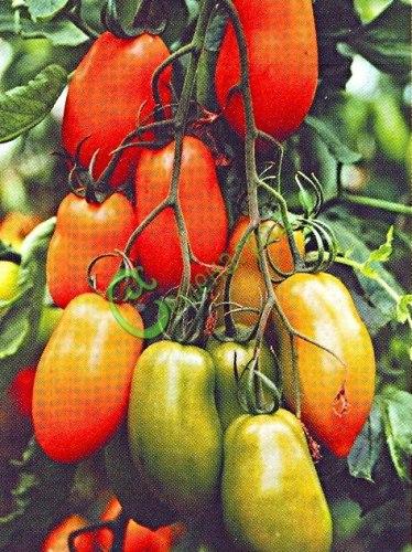 Семена томатов Красные сосульки - 20 семян - высокорослый, до 100 г, многоплодный