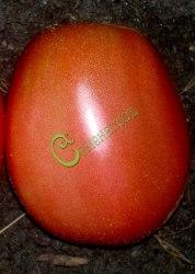 Семена томатов Лайнер - 1 уп.-20 семян - высокорослый, овальный, малиновый, до 300 г, плотный, хорош. Семенаград - семена почтой