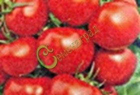 Семена томатов Ласточка плюс, 1 уп.-20 семян - высокорослый 2-3 м, до 150 г, устойчивый, очень холодостойкий, урожайный. Семенаград - семена почтой