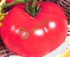 Семена томатов Лёва 20 семян - высокорослый, до 500 г, розовый