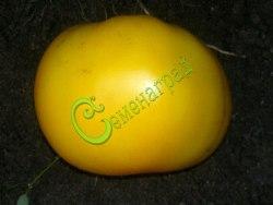 Семена томатов Лемон Бой - 1 уп.-20 семян - высокорослый, до 300 г, желтый, модный, эффектный. Семенаград - семена почтой