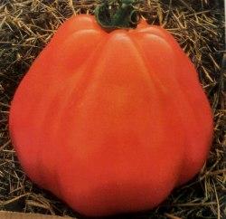 Семена томатов Лигурия - 1 уп.-20 семян, выведен в Италии - высокорослый, урожайный и надежный, плоды до 250 г, слегка ребристые, грушевидной формы, которые имеют исключительно нежный вкус. Семенаград - семена почтой