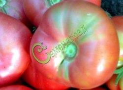 Семена томатов Малиновый гигант - 1 уп.-20 семян - высокорослый, до 600 г, малосемянный, урожайный, круглоплоский. Семенаград - семена почтой
