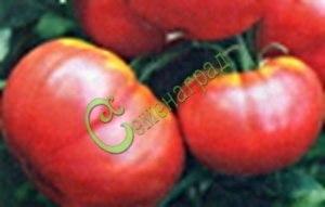 Семена томатов Малиновый штамбовый, 1 уп.-20 семян - круглоплоский, до 500 г. Семенаград - семена почтой