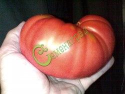 Семена томатов Одесский розовый - 1 уп.-20 семян - высокорослый, до 1 кг, надёжный, проверен годами. Семенаград - семена почтой
