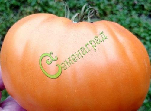 Семена томатов Оранжевые диетические, 1 уп.-20 семян - высокорослый, до 500 г, малосемянный, великолепный. Семенаград - семена почтой