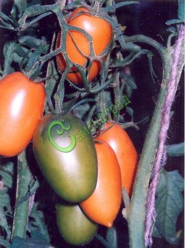 Семена томатов Оранжевые сосульки - 20 семян - высокорослый, до 100 г, оранжевый, удлиненный с кончиком, многоплодный