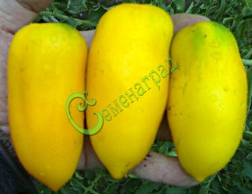 Семена томатов Перцевидный жёлтый - 20 семян - высокорослый, до 200 г