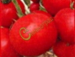 Семена томатов Ползуниха - 1 уп.-20 семян - высокорослый, до 200 г, многоплодный, очень урожайный. Семенаград - семена почтой