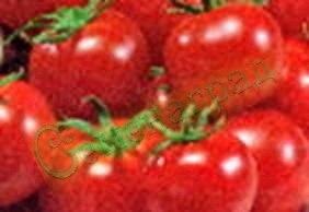 Семена томатов Балконное очарование (20 семян - низкорослый, до 100 г, ранний)