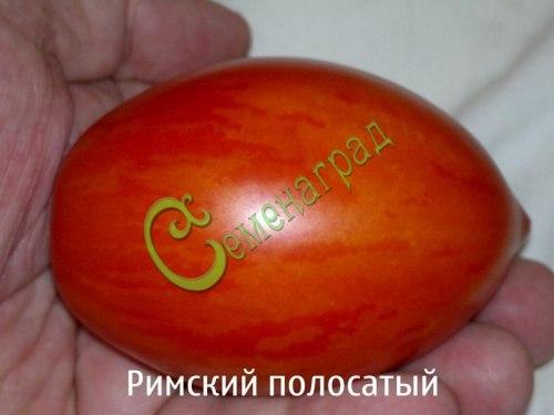 Семена томатов Римский полосатый - 1 уп.-20 семян - высокорослый, овальный, c носиком, с жёлтыми полосками, до 150 г. Семенаград - семена почтой