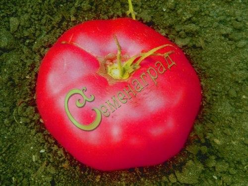 Семена томатов Розовый мёд - 1 уп.-20 семян - высокорослый, до 800 г, плоскоокруглый, сладкий и урожайный. Семенаград - семена почтой