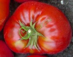 Семена томатов Розы Далласа - 1 уп.-20 семян - высокорослый, круглоплоский, тёмно-бордовый, до 500 г. Семенаград - семена почтой