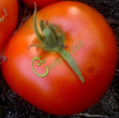 Семена томатов Самые лучшие - 20 семян - высокорослый, до 300 г