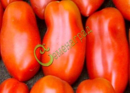 Семена томатов Сан Марцано-3, 20 семян, ранний, среднерослый, множество удлинённых плодов-сливок, до 100 г, в солку и салаты