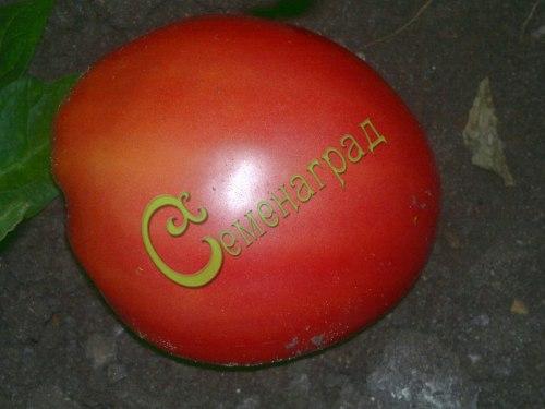 Семена томатов Сахарный гигант - 1 уп.-20 семян - высокорослый, малиновый, овальный, до 300 г, сладкий и зрелищный. Семенаград - семена почтой